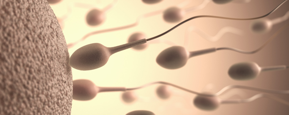 advantages and disadvantages of sexual reproduction
