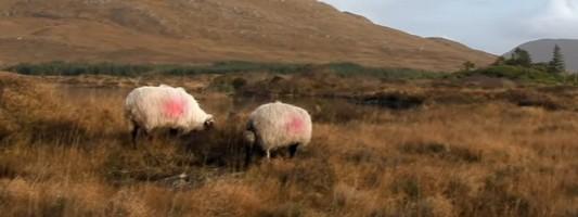 37-famous-irish-and-scottish-gaelic-sayings