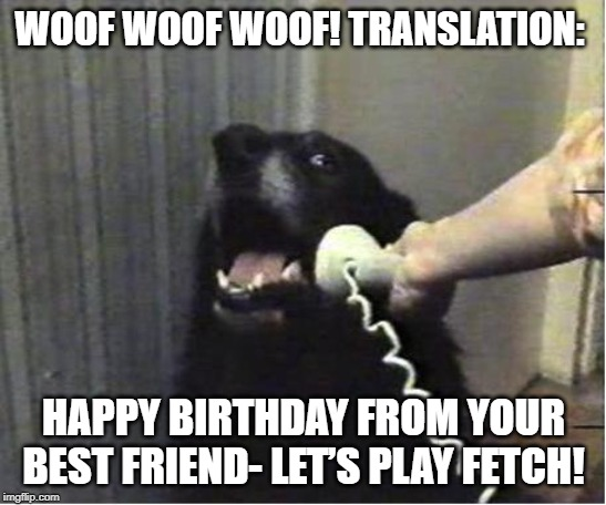 300 Funny Birthday Wishes Messages And Quotes Futureofworking Com